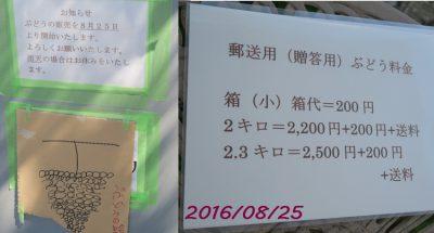 160825budoutyoku02