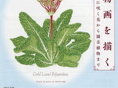 植物画を描く