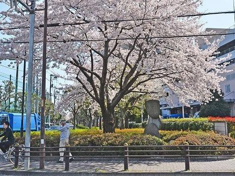 モニュメント・桜
