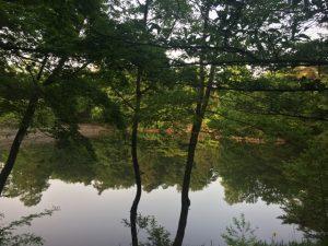 新緑の狭山公園