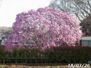 春を楽しむ 花と鳥