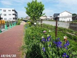 遊歩道の花・季節は立夏
