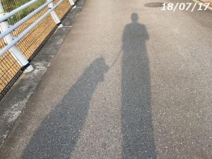 猛暑下の散歩、長い影