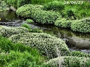 季節の白い花 空堀川