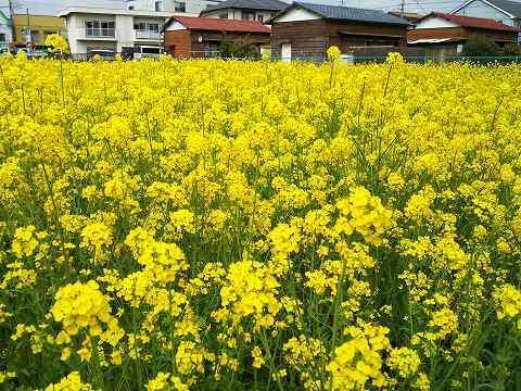 玉川上水駅周辺の風景118