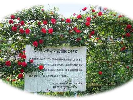 玉川上水駅周辺の風景125