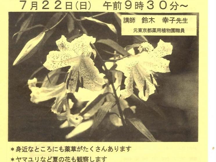 市内活動団体の紹介(薬草観察会)
