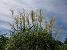 玉川上水駅周辺の風景36