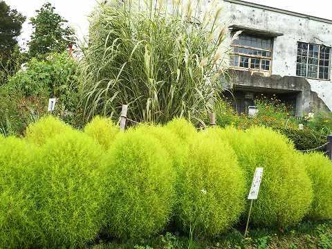 玉川上水駅周辺の風景102