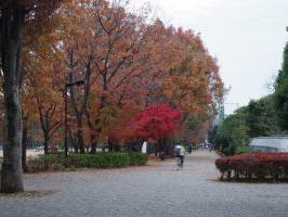 11月の東大和南公園