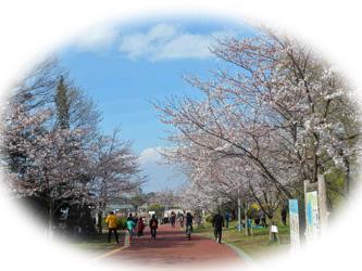春うらら・・狭山公園の花見