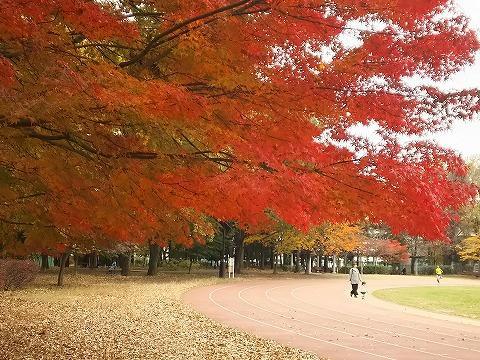 玉川上水駅周辺の風景47