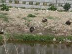 空堀川の鳥たち!