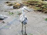 空堀川の水鳥