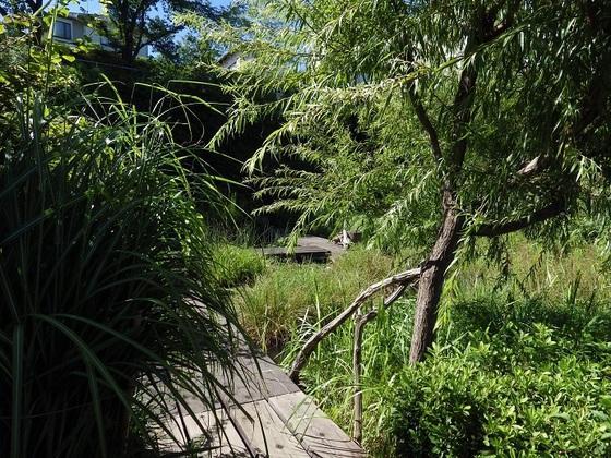 8月のトンボ池;東大和市
