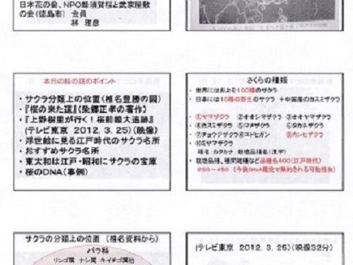 第38回講座パワポ資料「世界の桜!日本の桜!東大和の桜!」