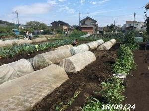 農園 どんどん進む秋作作業