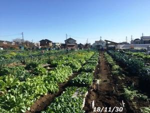 次年度の準備やすじぃの農園