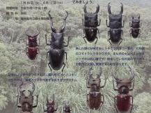 企画展示「日本と世界のクワガタムシ・ハナムグリ」
